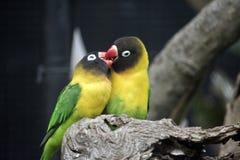Deux oiseaux d'amour Photos stock