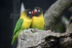 Deux oiseaux d'amour Images stock