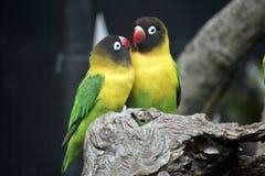 Deux oiseaux d'amour Image stock