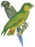 Deux oiseaux d'amour. Photographie stock libre de droits