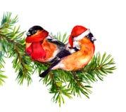 Deux oiseaux de bouvreuil dans le chapeau et l'écharpe rouges de Santa d'hiver sur l'arbre Photographie stock