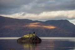 Deux oiseaux se reposent sur une roche dans le loch Linnhe Images stock