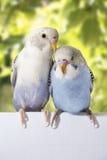 Deux oiseaux sont sur un fond blanc Photographie stock