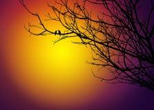 Deux oiseaux sur l'arbre dans le coucher du soleil Images libres de droits