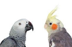 Deux oiseaux tropicaux de differents image libre de droits