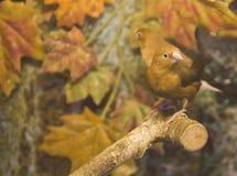 Deux oiseaux verts sur la branche photographie stock libre de droits