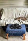 Deux ont abîmé les chats domestiques faisant une sieste sur des meubles de patio photos libres de droits