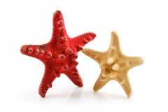 Deux ont coloré des étoiles de mer de Seashells d'isolement sur le blanc Photos libres de droits