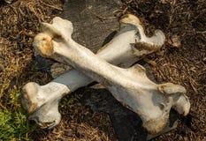 Deux ont croisé des os à la vieille ferme de bétail abandonnée dans le village perdu photos stock