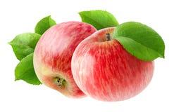 Deux ont isolé les pommes rouges Images libres de droits