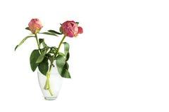 Deux ont séché la fleur de pivoine dans un vase sur un fond blanc Photographie stock