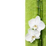 Deux orchidées et branches de bambou Image libre de droits