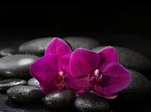 Deux orchidées pourpres sur les pierres noires humides Image stock