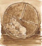 Deux ou trois hamsters dans une roue courante Photo stock