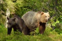 Deux ours Image libre de droits