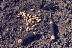 Deux outils de jardinage et oignons de semence au-dessus du sol photos stock