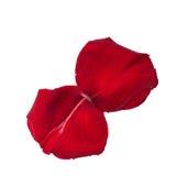 Deux pétales de rose d'isolement sur le blanc Images stock