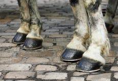 Deux paires de sabots de cheval blanc sur un trottoir de bloc Image stock