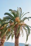 Deux palmiers Image libre de droits