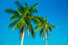 Deux palmiers Photo libre de droits