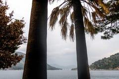 Deux palmiers images stock