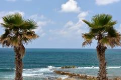 Deux palmiers sur la plage Photo libre de droits