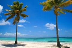 Deux palmiers sur la plage tropicale Image libre de droits