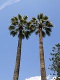 Deux palmiers sur le fond du ciel bleu Images libres de droits