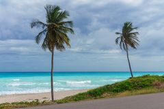 Deux palmiers sur un fond de la mer des Caraïbes azurée et du ciel pluvieux gris Photo libre de droits