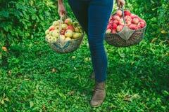Deux paniers des pommes Photographie stock