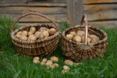Deux paniers des pommes de terre Image libre de droits
