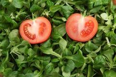 Deux parts de tomate dans la laitue verte de mache Image stock