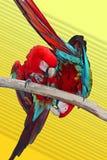 Deux perroquets photographie stock libre de droits
