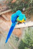 Deux perroquets photos libres de droits