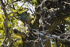 Deux perroquets dans un arbre photos stock