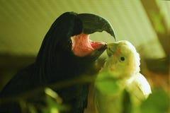 Deux perroquets drôles dans la vue de zoo photos libres de droits