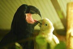 Deux perroquets drôles dans la vue de zoo images libres de droits