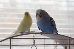 Deux perroquets se reposent sur la cage photo libre de droits