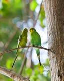 Deux perroquets se reposent sur un arbre dans le bois photographie stock