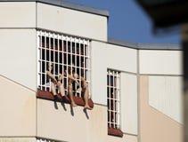 Deux personnes en prison derrière le trellis Photographie stock libre de droits