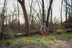 Deux personnes se sont habillées comme animaux se reposant par l'arbre Image libre de droits
