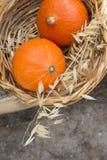 Deux petit héritage orange lumineux Kuri Pumpkins rouge dans l'avoine sèche sauvage de panier en osier Autumn Fall Atmosphere kin image libre de droits