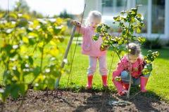 Deux petites filles aidant dans un jardin Photo libre de droits