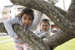 Deux petites soeurs jouant dans l'arbre de parc dehors image stock