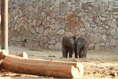 Deux petits éléphants sur une promenade images stock