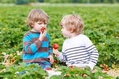 Deux petits amis ayant l'amusement à la ferme de fraise en été Photographie stock libre de droits