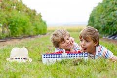 Deux petits amis, garçons d'enfant ayant l'amusement à la ferme de framboise Image stock