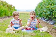 Deux petits amis, garçons d'enfant ayant l'amusement à la ferme de framboise Photos stock