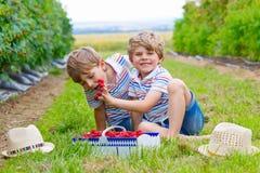 Deux petits amis, garçons d'enfant ayant l'amusement à la ferme de framboise Images libres de droits