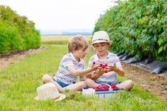 Deux petits amis, garçons d'enfant ayant l'amusement à la ferme de framboise Image libre de droits